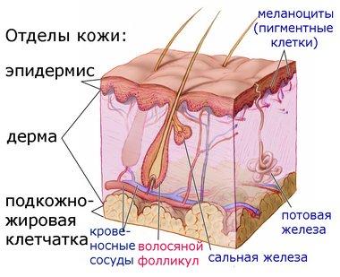 Жирная кожа лица. Как ухаживать, очищать и увлажнять жирную кожу Медафарм - Портал о пластической хирургии,медицинском оборудова