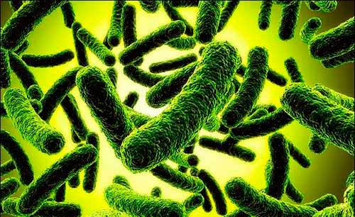 Существует ли дисбактериоз